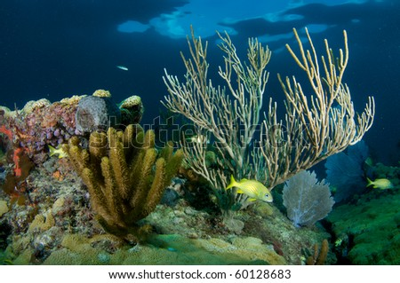 Coral Reef composition with fish aggregation. Picture taken in Broward County, Florida.
