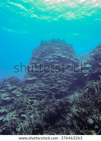 Coral reef ecosystem in the deep blue sea #376463263