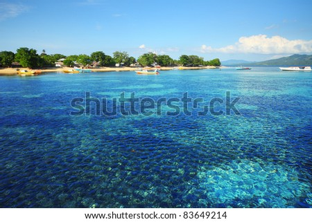 Coral reef in Bunaken national park. Area near village Bunaken. Sulawesi island. indonesia