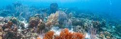 Coral reef in Carbiiean Sea
