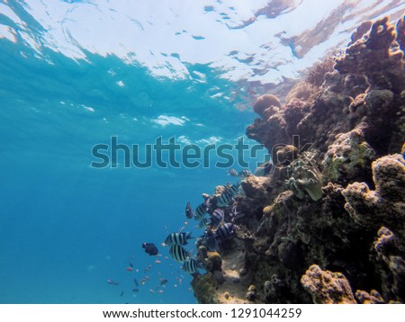 coral reef in eilat and Egypt 2018 scuba diving ,snorkeling under water, reef and sea animals, colorful fishes and coral in tropical water ,under water landscape , many colorful fishes sea animals stock photo