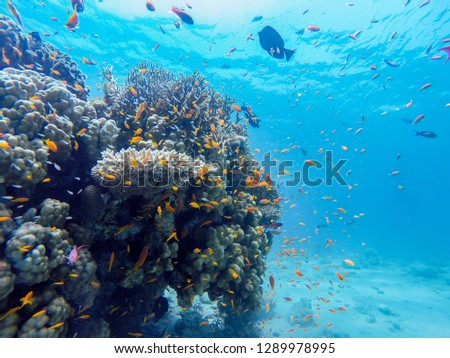 coral reef in eilat diving,and snorkeling under water reef and see animals, colorful fishes and coral in tropical water , under water landscape   stock photo