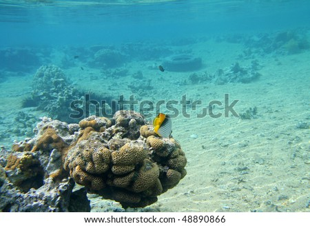 stock-photo-coral-reef-in-red-sea-48890866.jpg