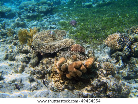 Coral reef in Red Sea - Tiran Island