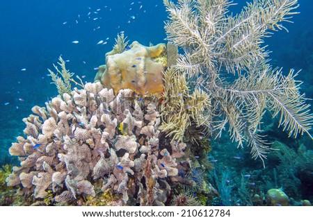 Roatan Coral Coral Reef in Roatan Honduras