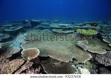 Coral reef in the indian ocean