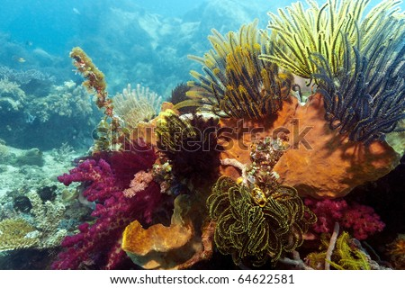 Coral reef in the Lembeh Striats of Indonesia with crinoids and corals
