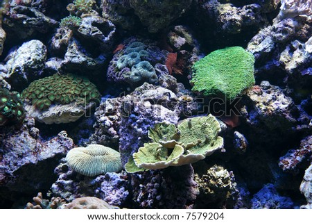 Coral Reef in tropical water