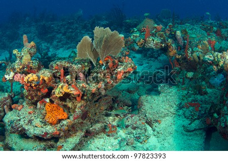 Coral Reef Landscape in south east Florida waters.