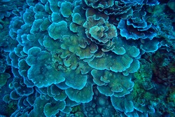 coral reef macro / texture, abstract marine ecosystem background on a coral reef