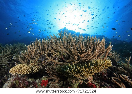 Coral reef of the maldives - stock photo