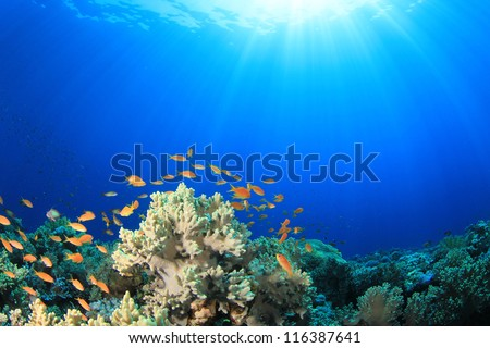 Coral Reef Scene with Tropical Fish in sunlight