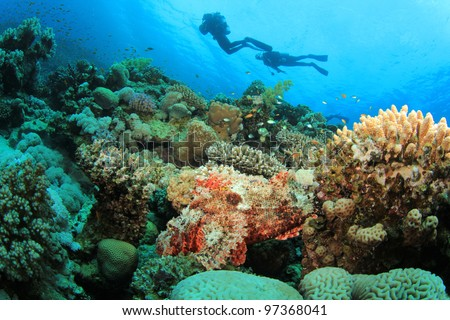 Coral Reef, Tropical Fish and Scuba Divers in the Red Sea - stock photo