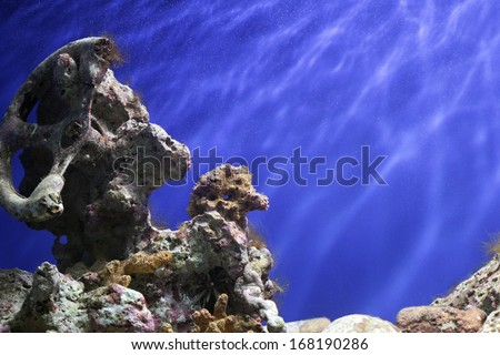 Coral Reef, Tropical Underwater Ocean