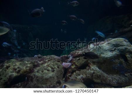 Coral Reef Underwater #1270450147