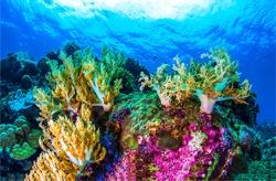 Coral reef underwater. Fish under the sea