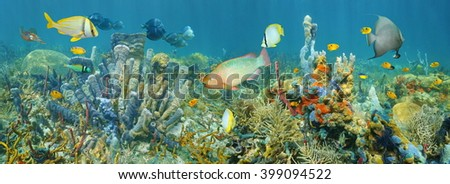 Coral reef underwater panorama with colorful marine life composed by tropical fishes and sea sponges, Caribbean sea #399094522