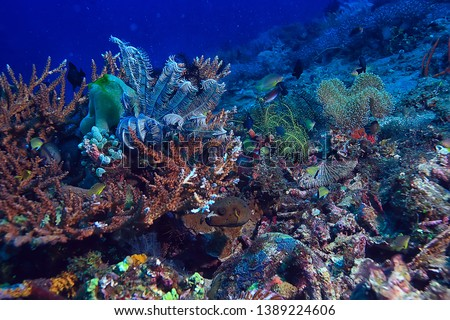 coral reef underwater / sea coral lagoon, ocean ecosystem #1389224606
