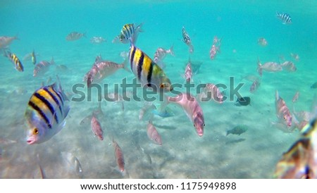 Coral reef with a variety of fish in Hurghada, Egypt. Underwater daytime photography. #1175949898