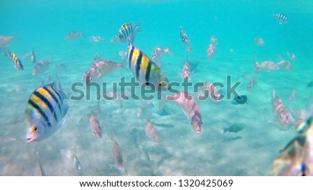 Coral reef with a variety of fish in Hurghada, Egypt. Underwater daytime photography #1320425069