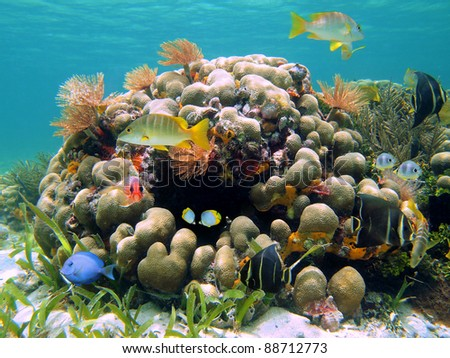 Coral reef with colorful tropical fish and sea worms, Caribbean, Costa Rica