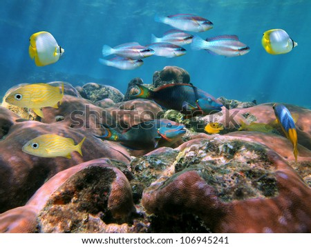 Coral reef with colorful tropical fish underwater in the Caribbean sea