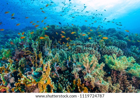 Coral reef with fish #1119724787