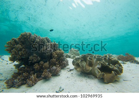 Coral reef with reflection