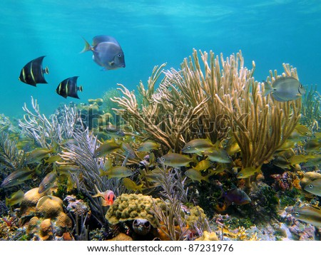 Coral reef with tropical fish in the Caribbean sea - stock photo
