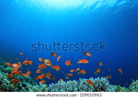 Coral Reef with Tropical Fish in the Ocean