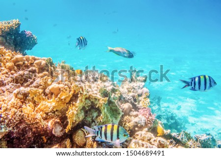 Coral reefs and fish and diver, underwater world #1504689491