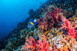Coral reefs and water plants in the Red Sea, colorful and full of different colors a.e