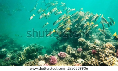Coral reefs in clear clear clear water, sea and diving. #1550339936