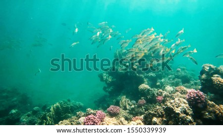 Coral reefs in clear clear clear water, sea and diving. #1550339939