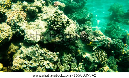 Coral reefs in clear clear clear water, sea and diving. #1550339942