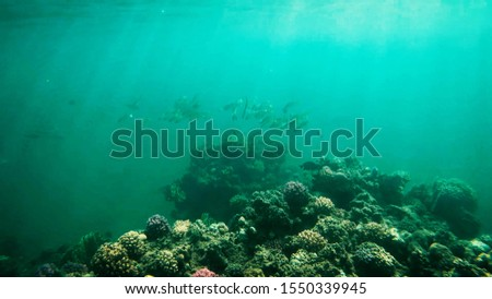 Coral reefs in clear clear clear water, sea and diving. #1550339945