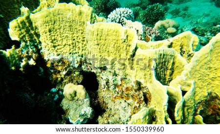Coral reefs in clear clear clear water, sea and diving. #1550339960