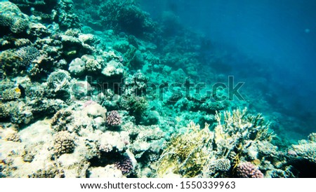 Coral reefs in clear clear clear water, sea and diving. #1550339963