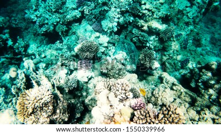 Coral reefs in clear clear clear water, sea and diving. #1550339966