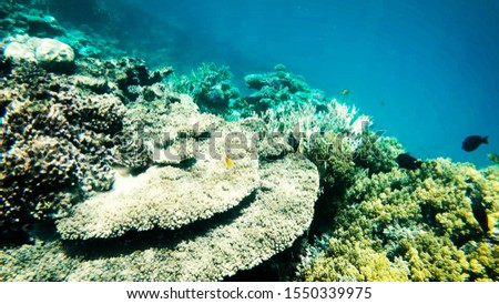 Coral reefs in clear clear clear water, sea and diving. #1550339975