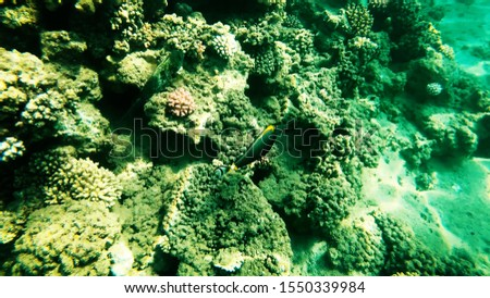 Coral reefs in clear clear clear water, sea and diving. #1550339984