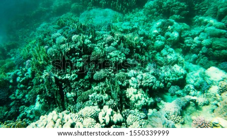 Coral reefs in clear clear clear water, sea and diving. #1550339999