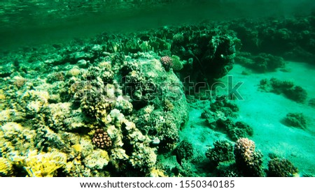 Coral reefs in clear clear clear water, sea and diving. #1550340185