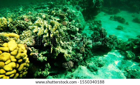 Coral reefs in clear clear clear water, sea and diving. #1550340188