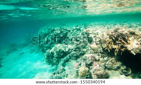 Coral reefs in clear clear clear water, sea and diving. #1550340194