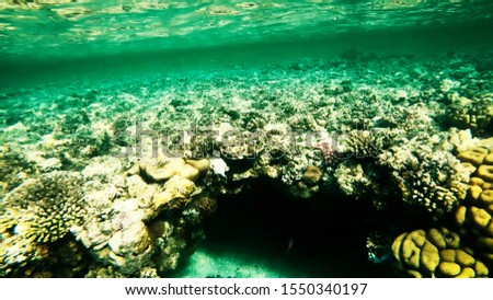 Coral reefs in clear clear clear water, sea and diving. #1550340197
