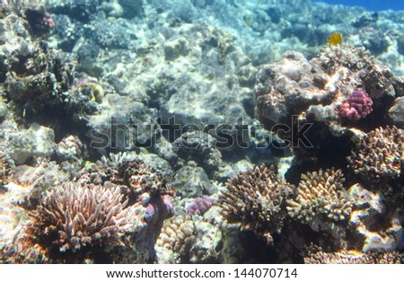 Coral scene at Red Sea