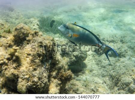 Coral scene at Red Sea