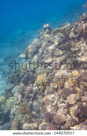 Coral scene at Red Sea, Egypt