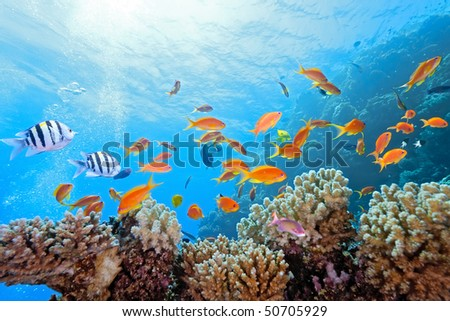 Coral scene on the reef